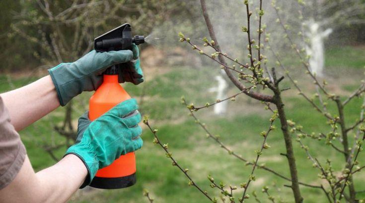 Что такое баковые смеси, или Как правильно смешивать пестициды | Дела огородные (Огород.ru)