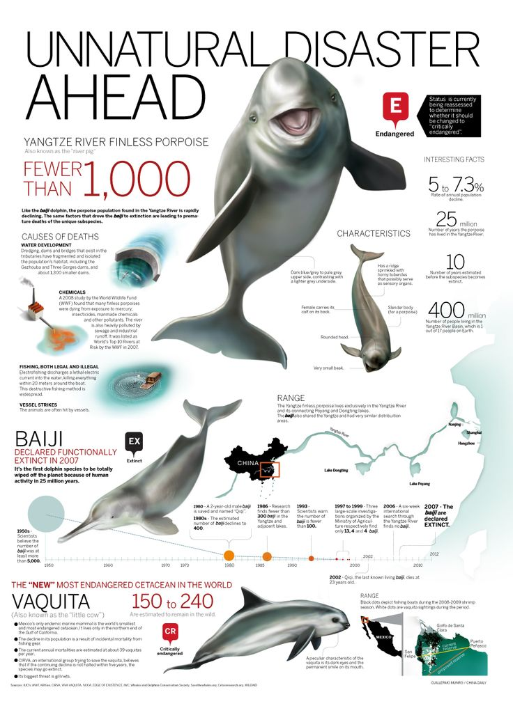 110 best dolphin study images on Pinterest   Dolphins, Common ...