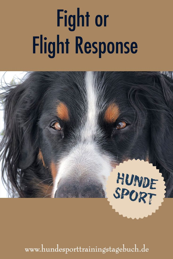 Fight Or Flight Response Die Auswirkungen Auf Unseren Hund Im Hundesport Veroffentlicht 17 5 2018 Hundesport Hundetraining Hunde