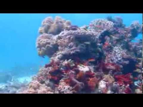 Rote Dive Centre