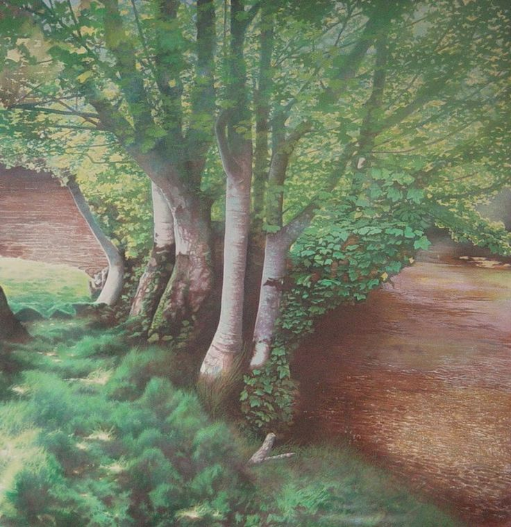 Sycamores by Mike Bernard on ArtClick.ie