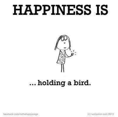 Mejores 94 imágenes de For The Love of Birds en Pinterest   Búhos ...
