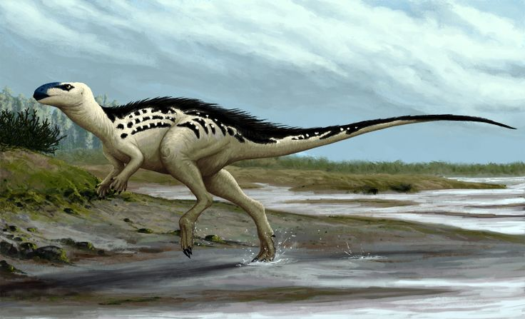 An illustration of the basal Ornithopod from the Czech Republic – Burianosaurus augustai |  Picture Credit: Edyta Felcyn