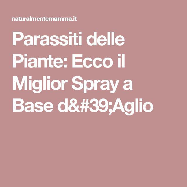 Parassiti delle Piante: Ecco il Miglior Spray a Base d'Aglio