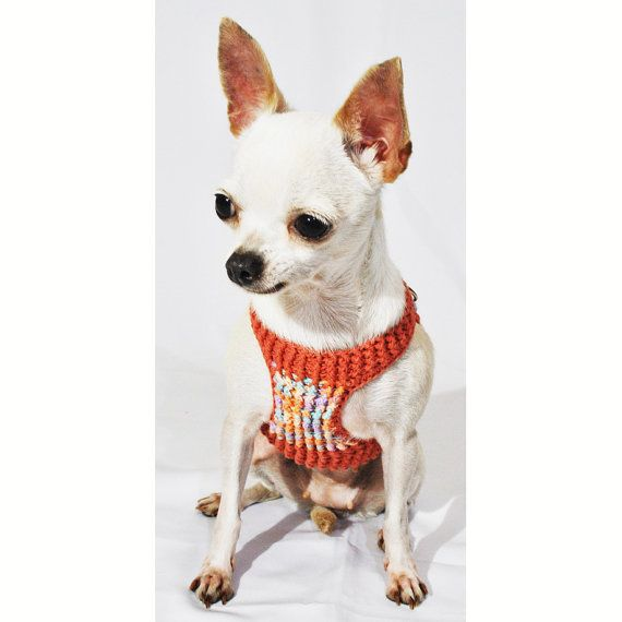 79 best CHIHUAHUAS images on Pinterest | Doggies, Dog clothing and ...