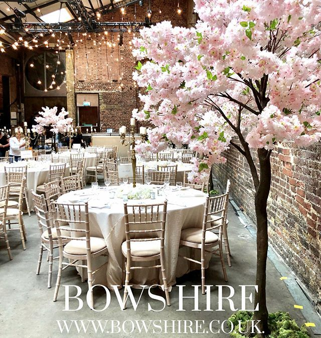 Cherry Blossom Trees For Hire