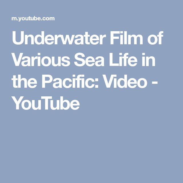 Underwater Film of Various Sea Life in the Pacific: Video - YouTube