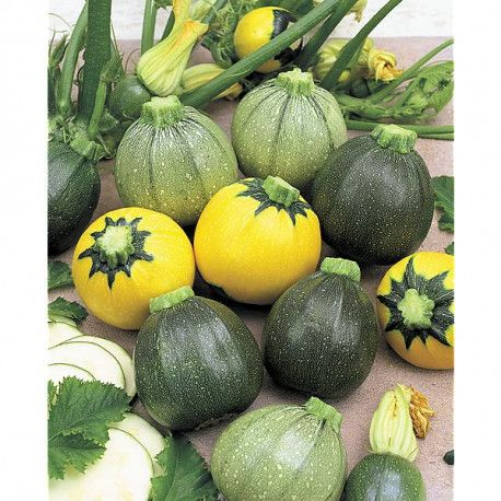Courgette f1 rondes mix