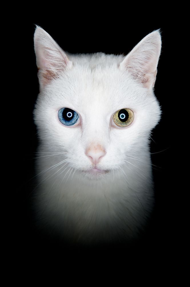 Cat Eyes That Shine Orange At Night