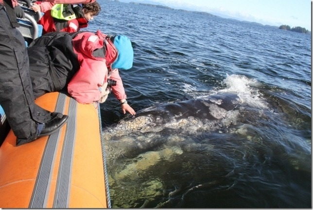 Whale Watching  Ucluelet - Life on the Edge  www.ucluelet.travel