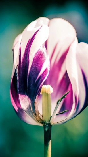 Flower Bokeh Macro - The iPhone Wallpapers