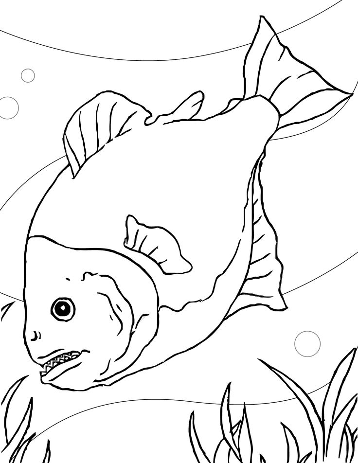 Piranha Ink Coloring Page For Kids And Adults From Fishes Pages Other Fish