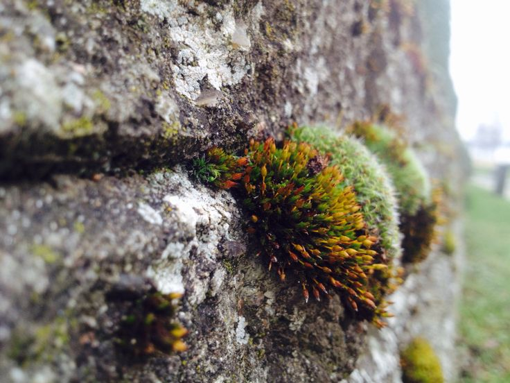 Growing in Stone