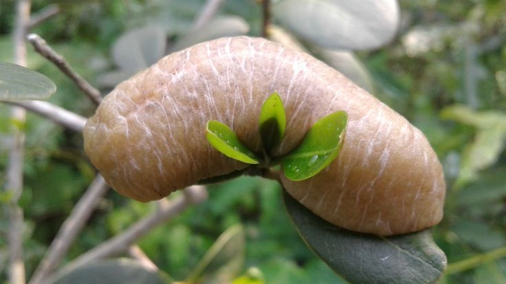 A peculiar looking slug spotted on the farm. 🌞