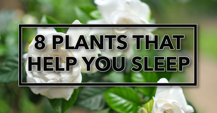 Get A Better Night's Sleep With These Plants