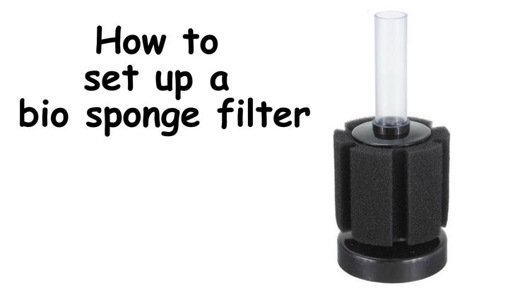 Easy step by step guide on how to set up a bio sponge for How to set up a fish tank filter