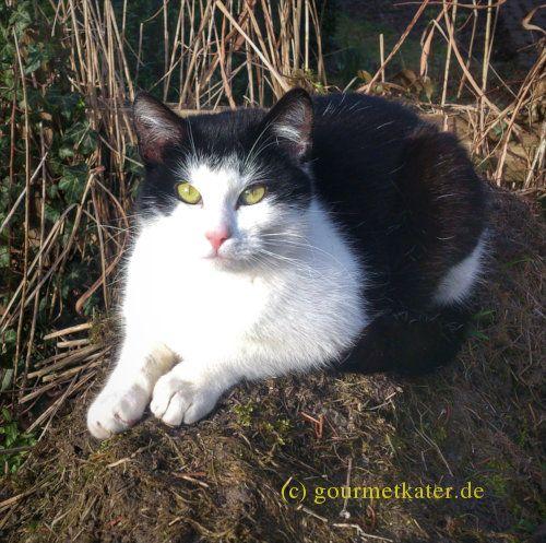 Kater Tobi #katze #cat