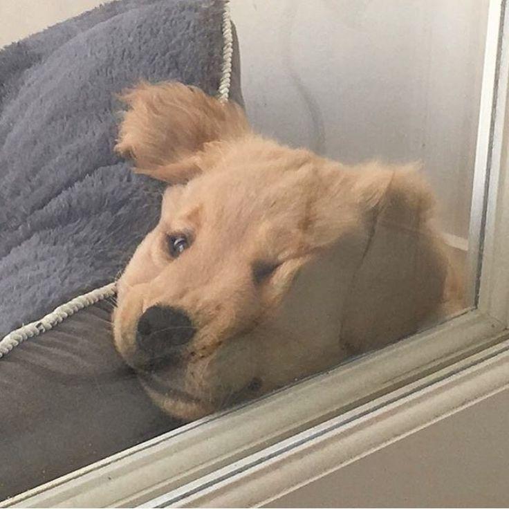 please let me in