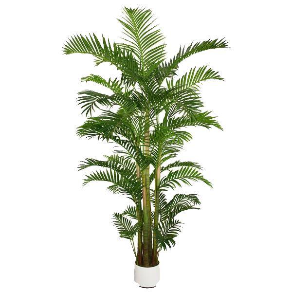 Palmier Areca extérieur 9,8 pied