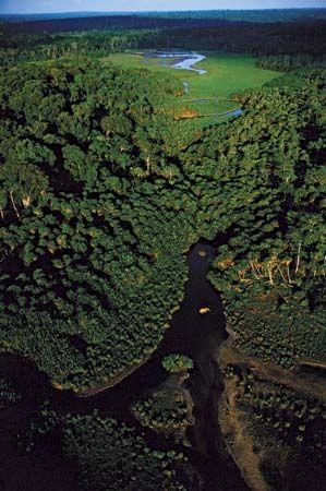 Congo, Republic of the: Congo rain forest