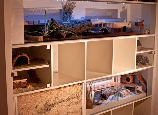 Smart Spaces for your pet! An AMAZING hamster paradise!Expedit Bookcas, Cages Ideas, Ikea Bookcases, Guinea Pigs Cages, Pets Ideas, Hamsters Mansions, Ikea Hacks, Ikea Furniture, Animal Pets