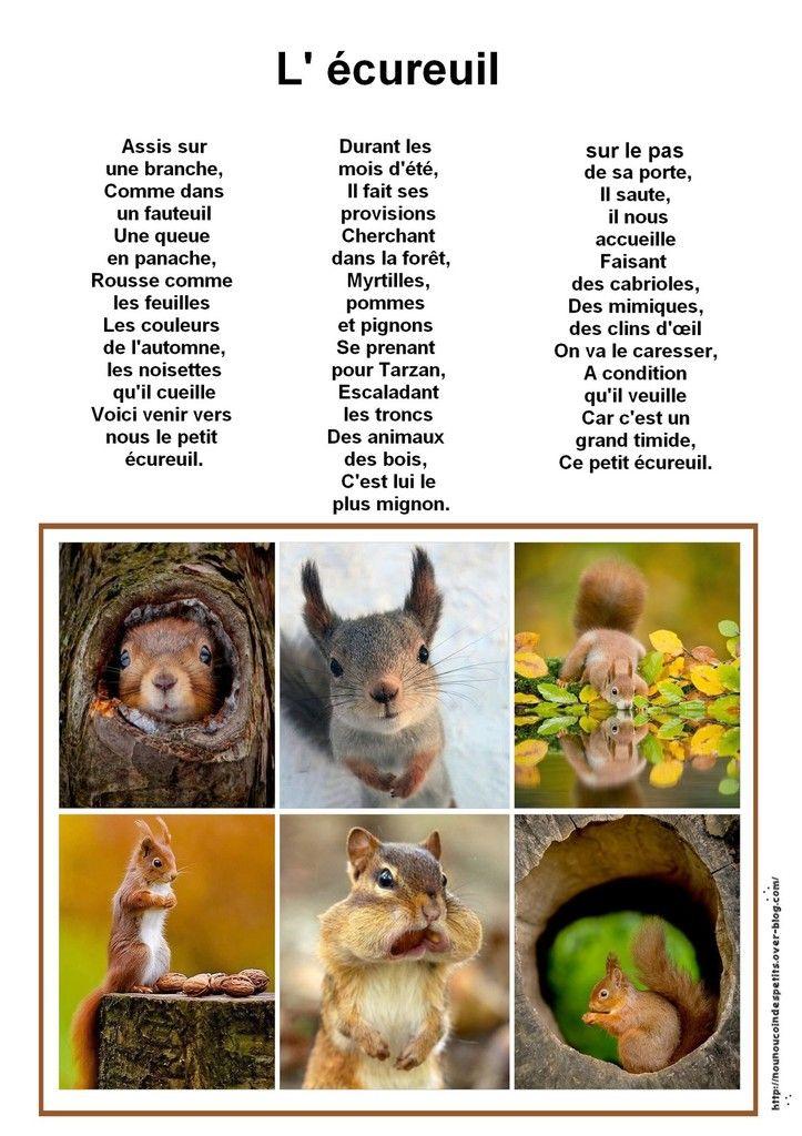 .. l'écureuil ..