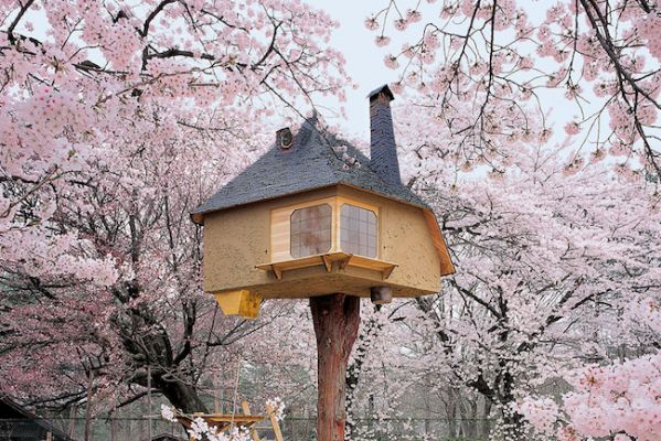 藤森照信によるツリーハウス