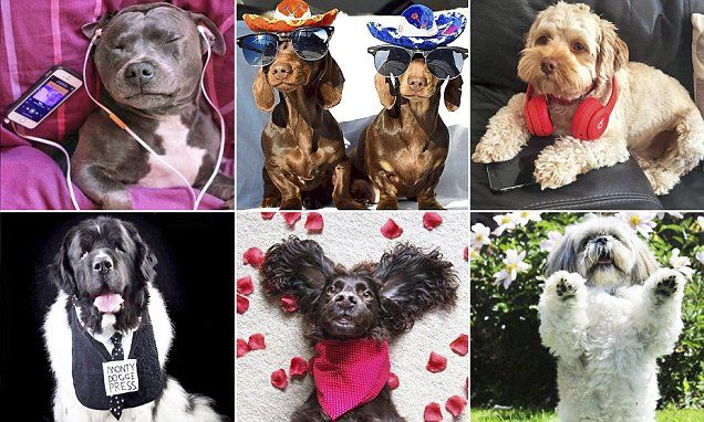 Meet the top dogs of Instagram who earn their owners £1,000  a day