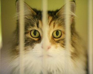 SIGN PETITION - VIRGINIA NO-KILL BILL - Countless homeless animals will be saved from unnecessary euthanization thanks to a proposed no-kill shelter policy. Show your support for this initiative and praise the move to reduce animal euthanasia and instead help find forever homes for these animals.