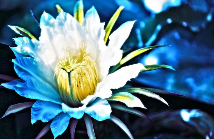 Flor de Cactus, Lago Calima. JAIRO GUTIERREZ PHOTOGRAPHER • COLOMBIA