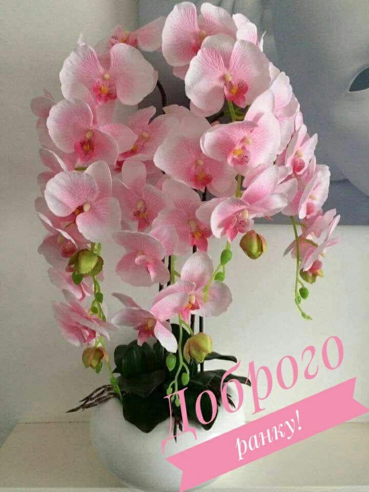 Картинки доброе утро орхидея