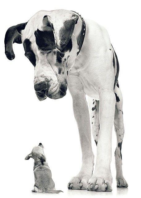 Little pup Big pup