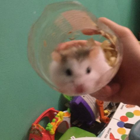 DIY hamster tube out of water bottle