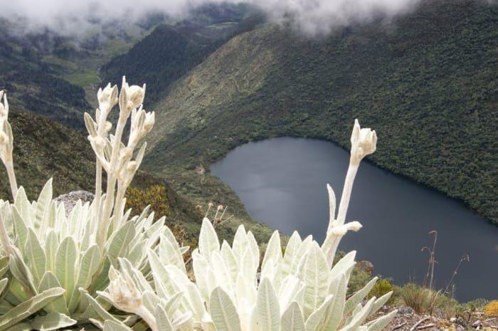 La Laguna Negra está situada en el Parque Nacional Sierra Nevada, en el estado Mérida a varios kilómetros de la laguna de Mucubají. La Laguna Negra es uno de los principales atractivos turísticos del estado Mérida, y llama la atención por su color oscuro.