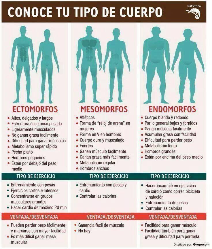 Ejercicio para tipos de cuerpo, ectomorfo, mesomorfo, endomorfo. -------->…