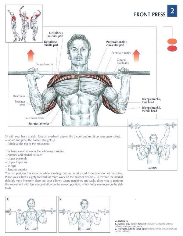 how to get defined muscles in arms
