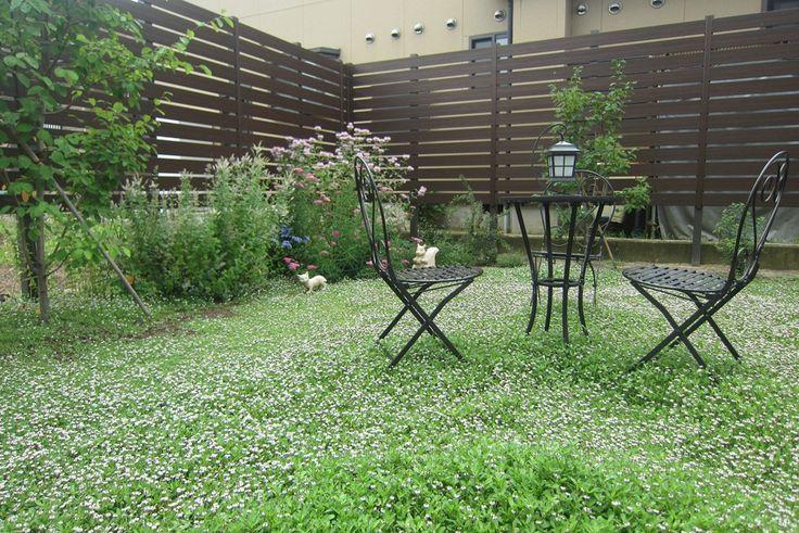 クラピアの庭