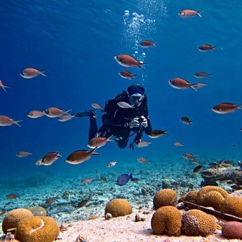 35 best dive down under images on pinterest diving snorkeling and scuba diving - Dive e divi ...