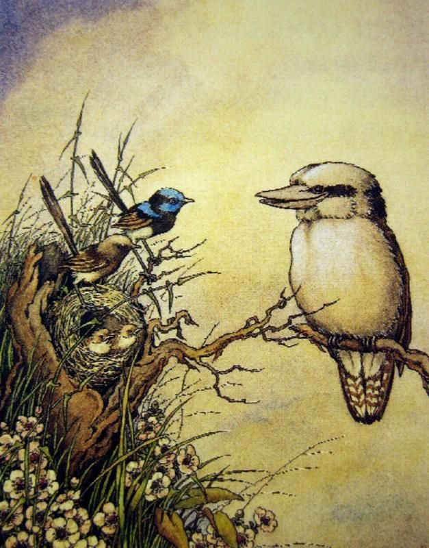 The Willy-Wagtails and the Kookaburra:  Ida Rentoul Outhwaite (Australian illustrator)