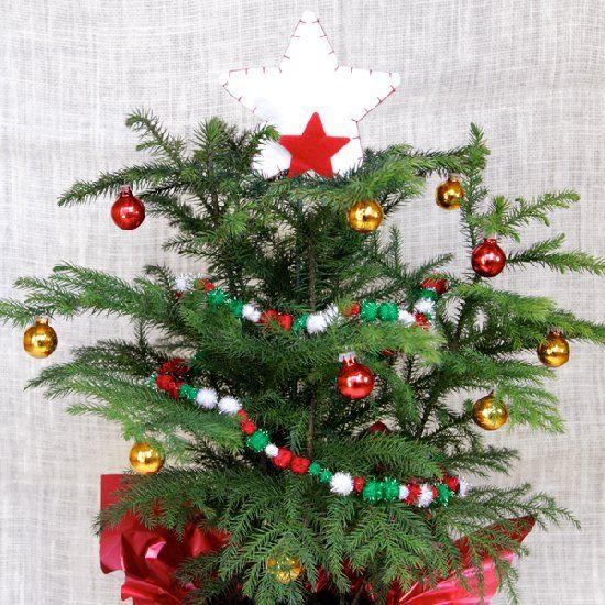 Best Christmas Decorations Long Island: 63 Best Norfolk Island Pine Images On Pinterest