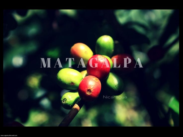 Matagalpa, Nicaragua's Coffee Country. The scenic hill country of northern Nicaragua is where the world looks to find the finest coffee & chocolate. You will also find spectacular countryside for hiking.