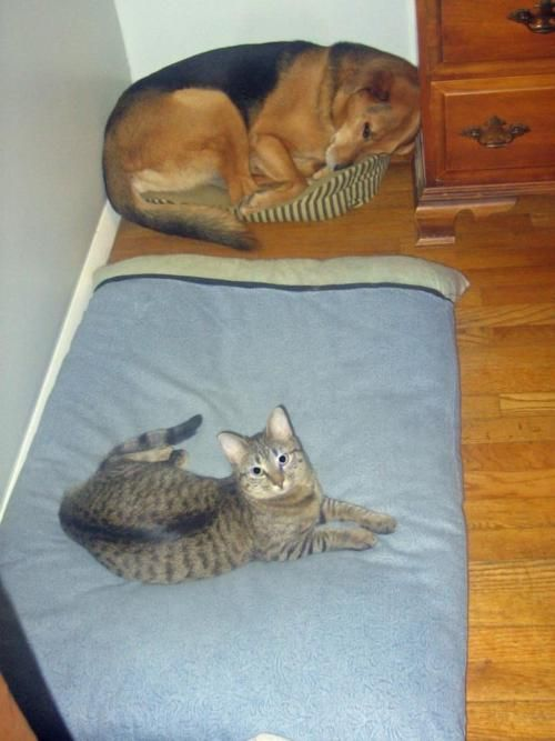 cats and dogs.Dogs Beds, Funny Pictures, Funny Cat, Pets, House, Funny Animal, Kitty, Feelings, Baby Cat