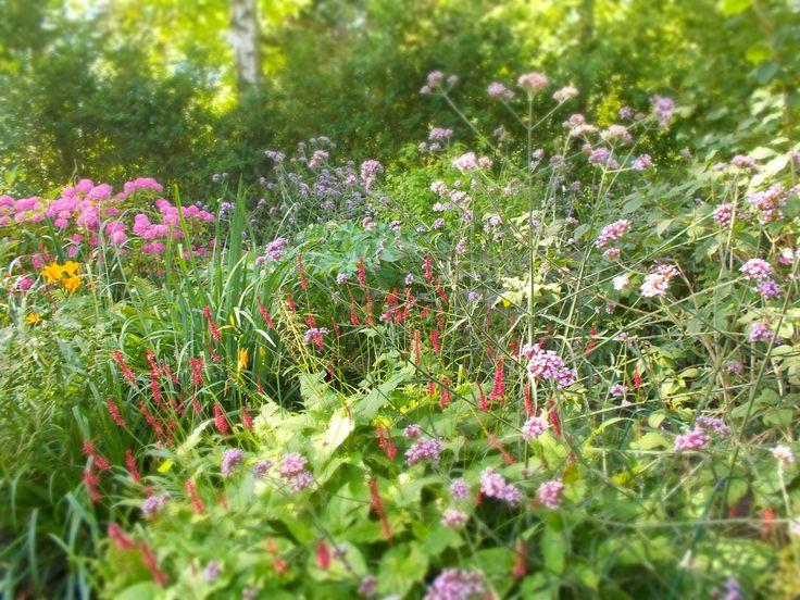 Steeds meer Amsterdammers zijn geïnteresseerd in het pachten van een stukje grond en het bouwen van een tuinhuisje in een van de tuinparken van Amsterdam. Een fantastische manier om te genieten van de natuur en groen dichtbij je eigen huis. Een percentage mensen is fanatiek moestuinder, anderen willen alleen een tuin om van teREAD MORE