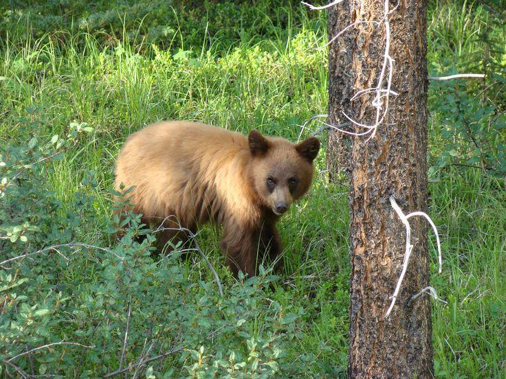 Pin by wanderlustmark on wanderlusting for wildlife pinterest