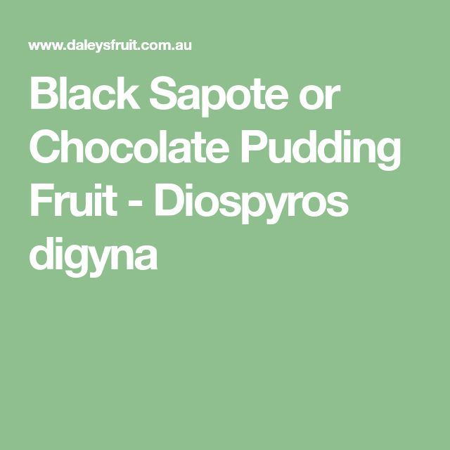 Black Sapote or Chocolate Pudding Fruit - Diospyros digyna