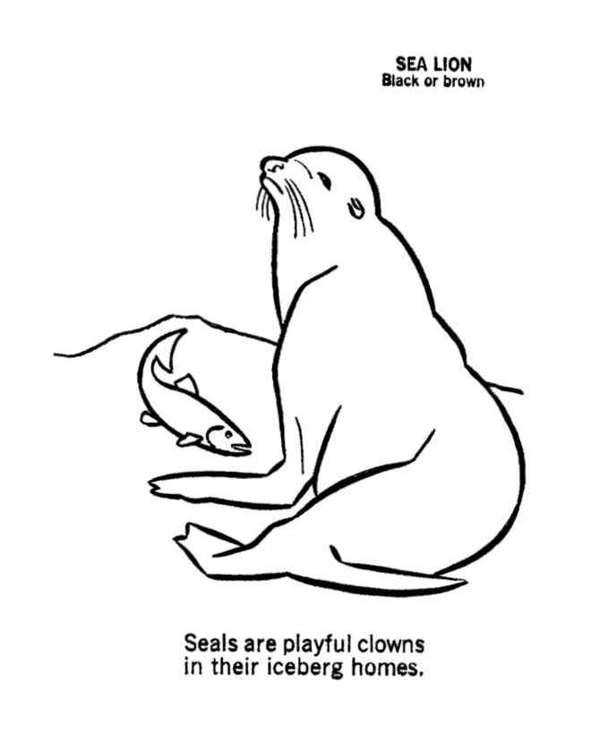 seal coloring page seal catching fish coloring page