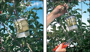 This product is a dream come true for many gardeners. In just 8 weeks you can produce a brand new plant of a size that would take 3 years from seed or a cutting.: Pots Gardens, Dream Come True, Awesome Products, Branding New, 3 Years, Fruit Trees, Pears Trees, Figs Trees, Dreams Coming True