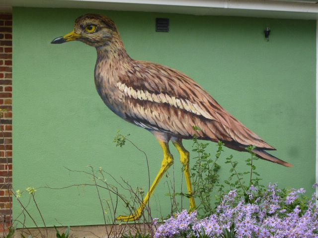 Mural of 'goggle-eyed plover' aka stone curlew, painted on the wall of the toilet block in Queen Elizabeth Gardens, Salisbury, to celebrate the welcome success of the Wessex Stone Curlew project. (October, 2014)