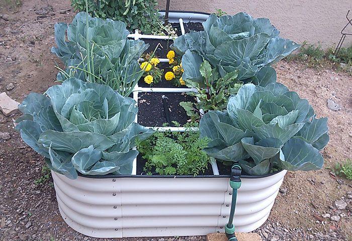 Self Watering Innovations In Santa Fe Nm Santa Fe Nm Raised Beds And Self Watering