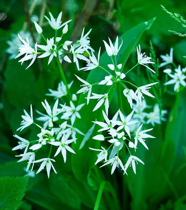 ramslok-blomster